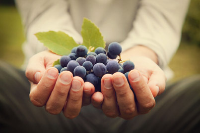 Napa Vineyard Management Services