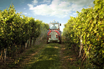 Sanoma Vineyard Management Services